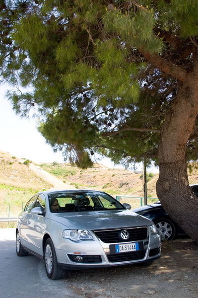 Passat under the tree