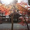 Komyoji_028.JPG