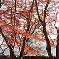 Komyoji_043.JPG