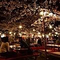 圓山公園花見