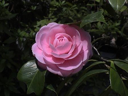 Japan_2003_DSC00034