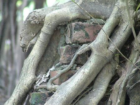 2011_大安森林公園_2011_05_DSC00201