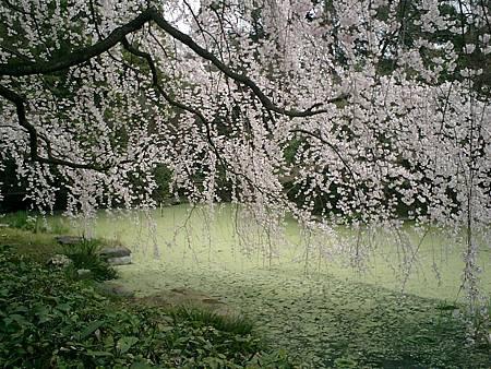 2003_Japan_CIMG0003 (21)