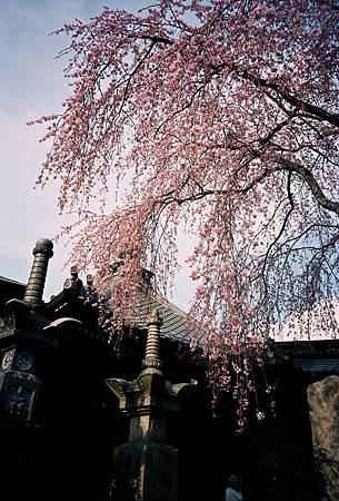 Japan_03_2003_image0005_1