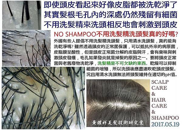 NO SHAMPOO不用洗髮精洗頭髮真的好嗎?