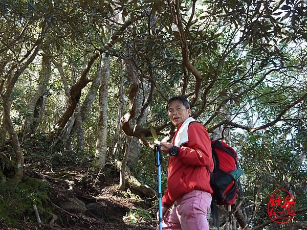 好客加里山登山22.jpg