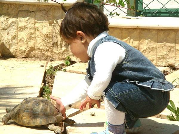 龜龜等等我
