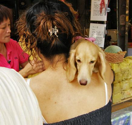這隻狗狗奪走了女主人的風光..