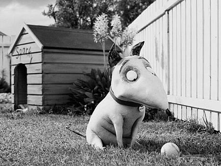 科學怪犬03