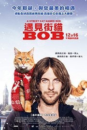 遇見街貓BOB