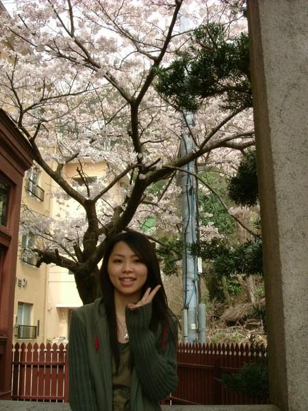 在風見雞館門口也有漂亮的櫻花