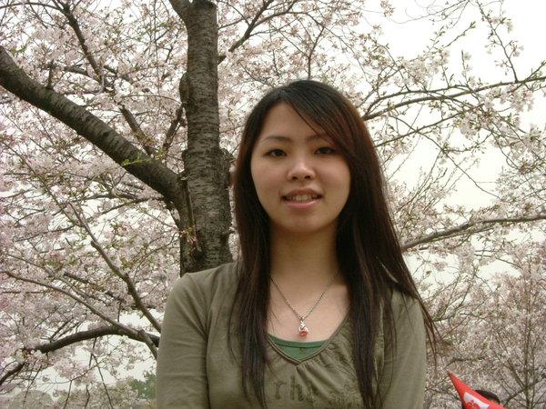 大阪城的櫻花