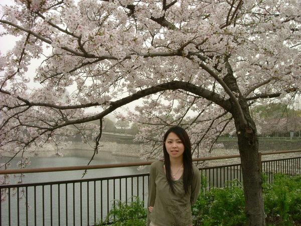 看到櫻花就一直拍