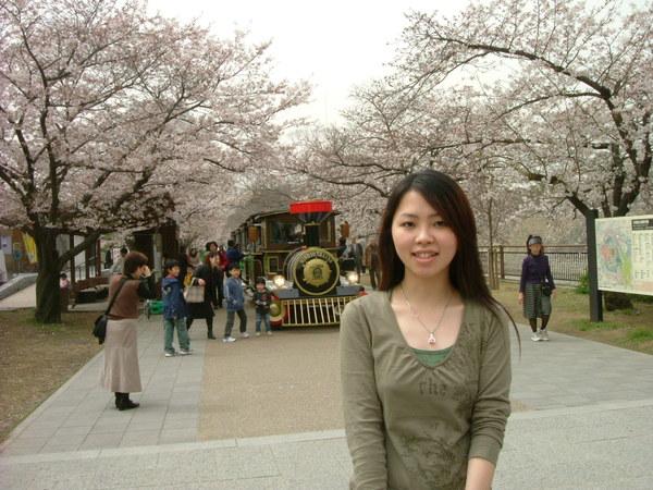 小火車和櫻花樹
