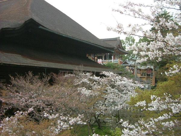 清水寺.地主神社就在清水寺旁