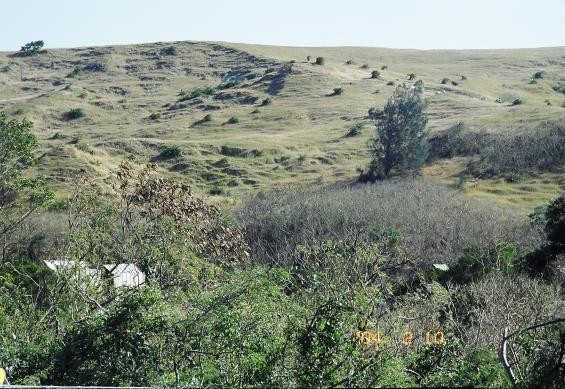 出火旁的大草原