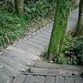 森林中的樓梯