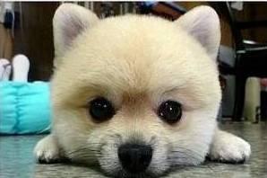 眼睛超~大的狗.jpg