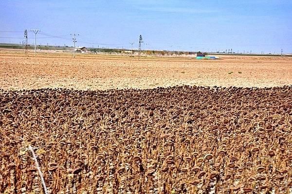 安納托利亞高原旱田