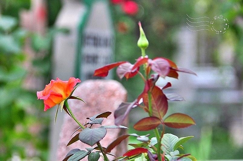 孔亞市區公墓