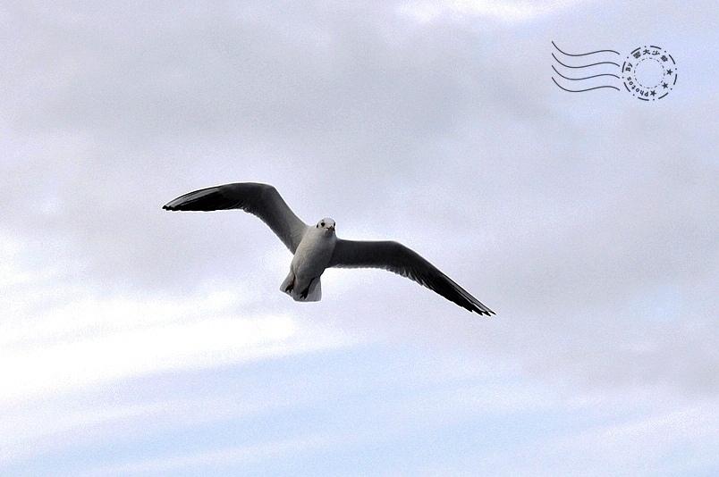 達達尼爾海峽海鳥