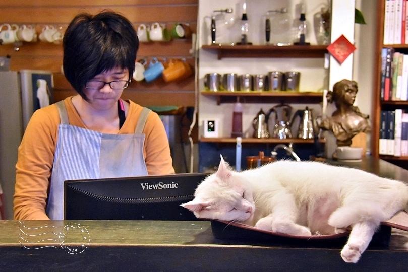 花蓮時光二手書屋店貓