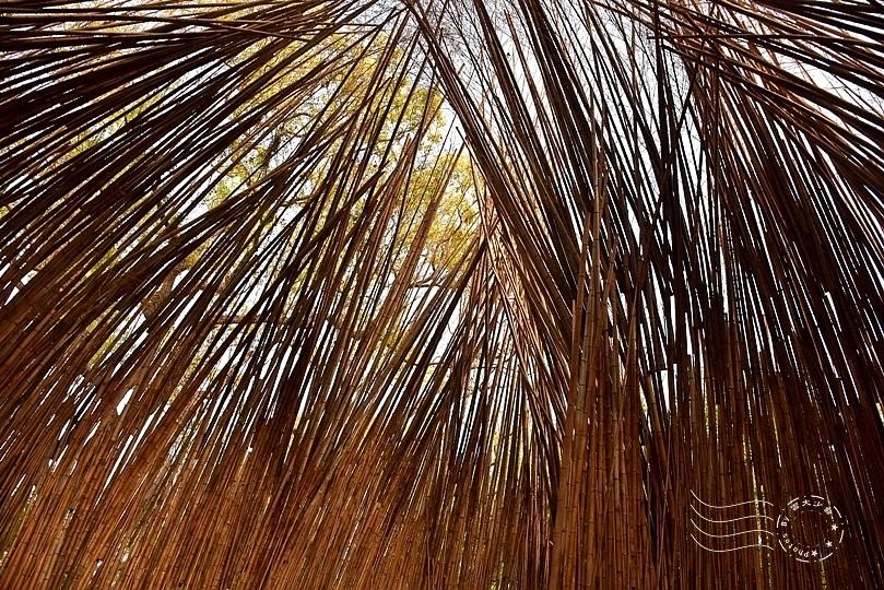 台中花博:后里森林園區(從天上掉下一顆種子)