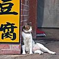 深坑老街街貓