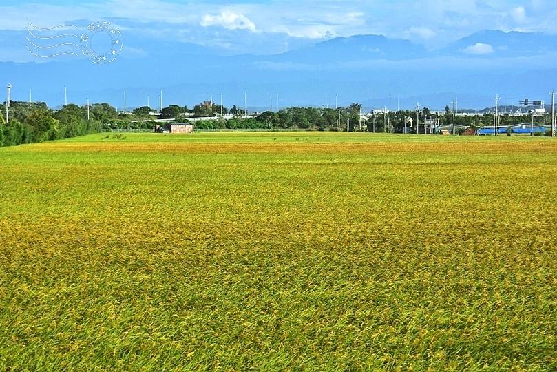 濱海公路稻田