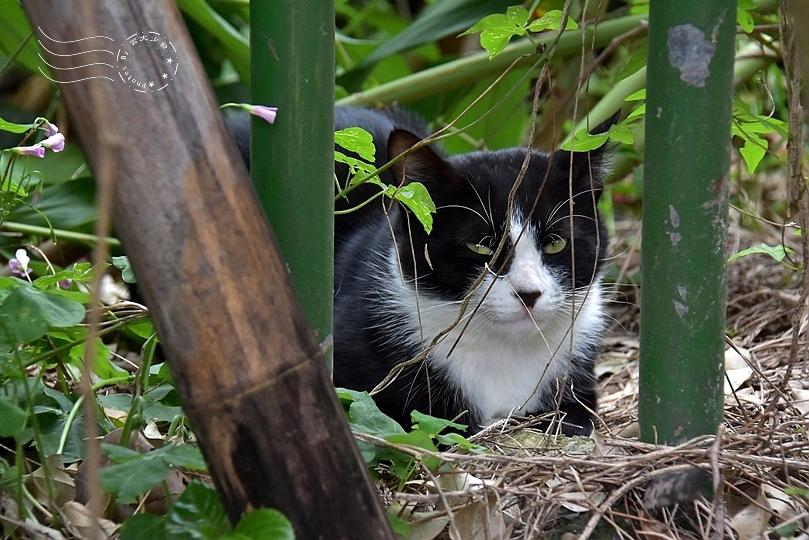 榮星花園貓