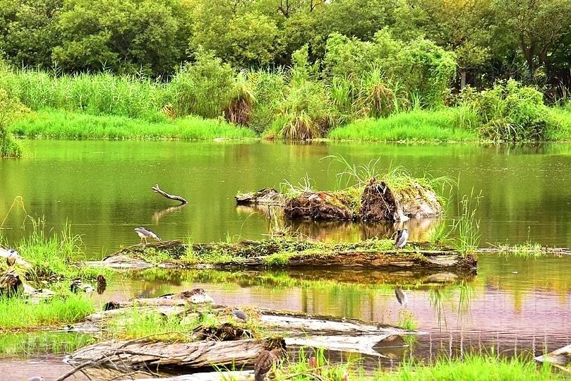 羅東林業文化園區貯木池
