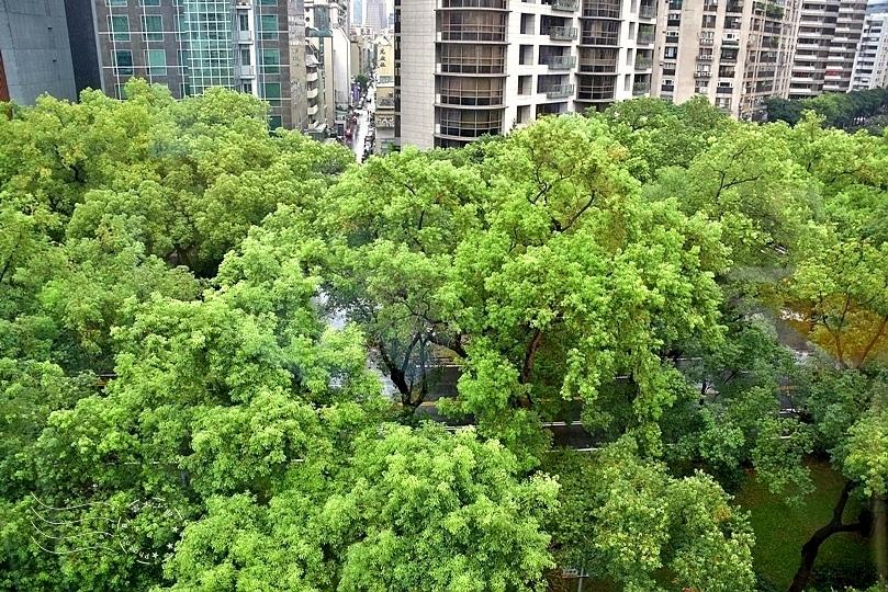 敦化南路行道樹