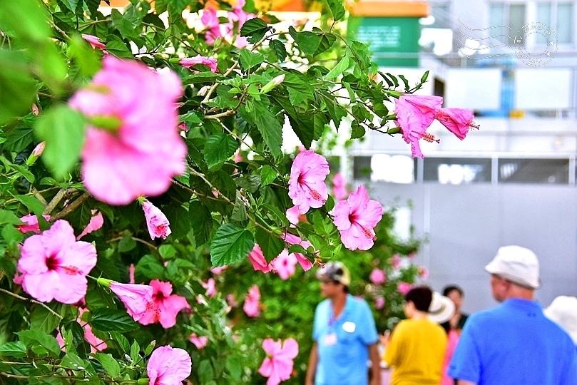 香草菲菲芳香植物博物館