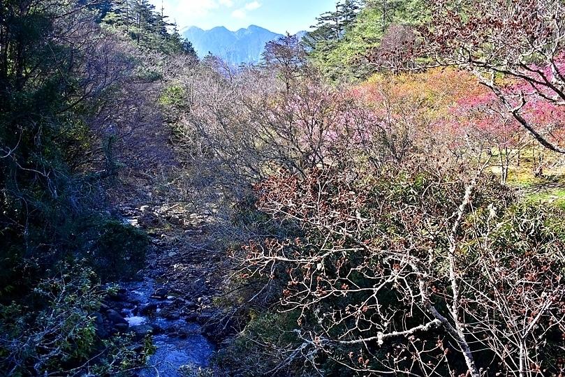 武陵農場高山溪