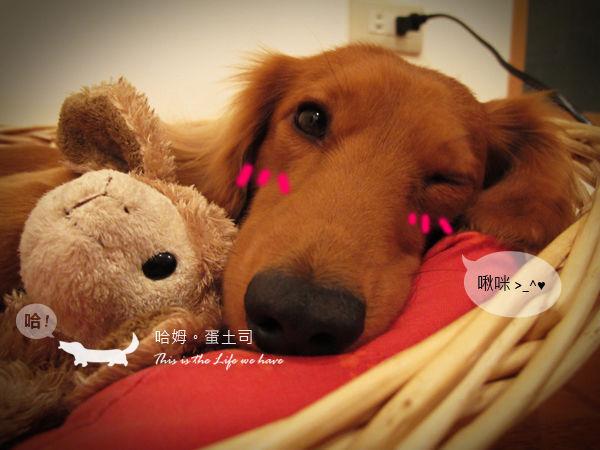 啾咪~晚安~