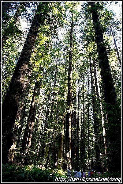 美國加州-紅木森林&穿樹洞 (10)
