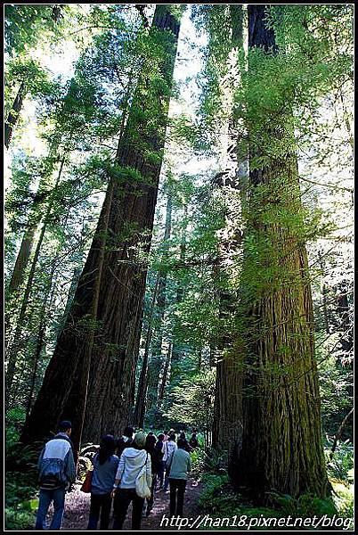 美國加州-紅木森林&穿樹洞 (11)