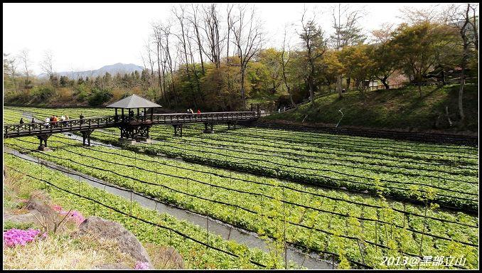 【2013黑部立山】Day3。大王山葵農場、上高地 (5).jpg