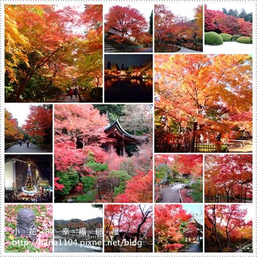 2013秋楓京都