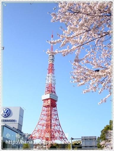 芝公園&東京鐵塔