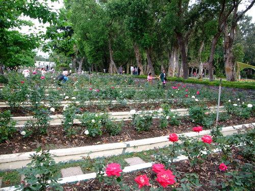2009士林官邸玫瑰花季
