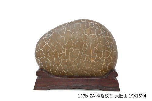 神龜紋石10
