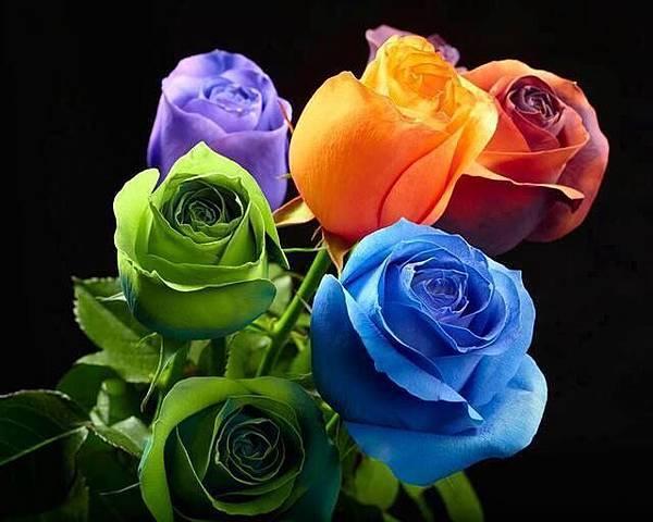 玫瑰花兒2
