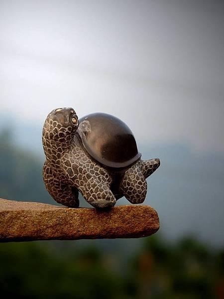 小小福龜6