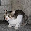 【TNR】貓貓們近況  026.jpg