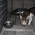 【TNR】貓貓們近況  032.jpg