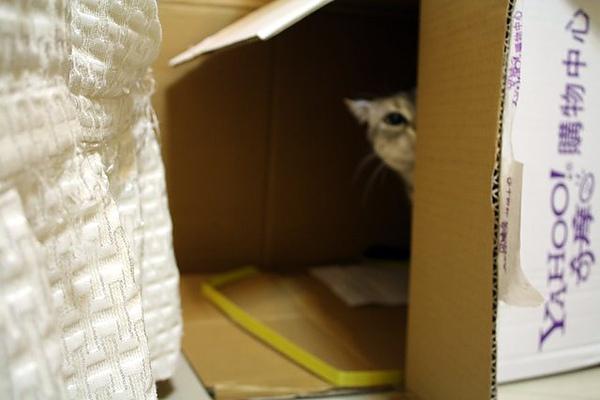 FiFi對箱子 很感興趣吶