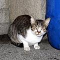 【TNR】貓貓們近況  016.jpg