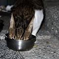 【TNR】貓貓們近況  011.jpg