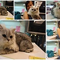 20100808TNR-抓到貓+鄰居寵物21.jpg